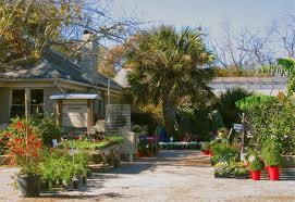 Ways to get ready for spring in central texas go 20 for Barton creek nursery